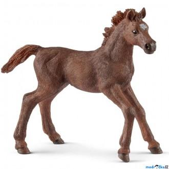 Ostatní hračky - Schleich - Kůň, Anglický plnokrevník hříbě