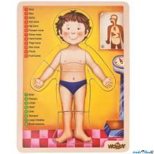 Puzzle výukové - Anatomie, Lidské tělo ANGLIČTINA, 12ks (Woody)
