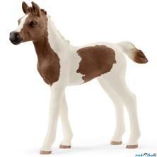Schleich - Kůň, Pintabianské hříbě
